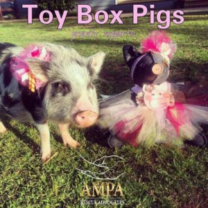 toy box pig bowtique